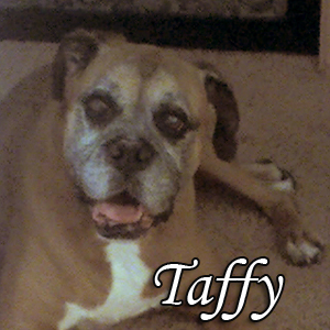 Taffy (the second) 2001-2011