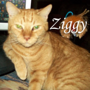 One Year Gone – Farewell, Zigacious Amadeus